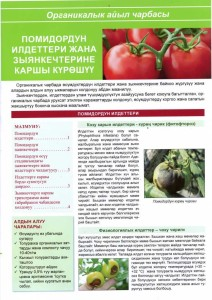 The fight against pests and diseases of tomato.